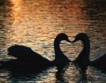 casal-do-amor-3272