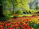 como-criar-um-jardim-com-pouco-dinheiro-4